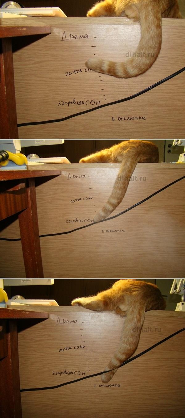 Не будите спящего кота!