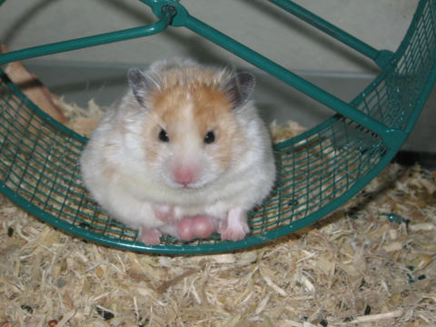 X hamster foto