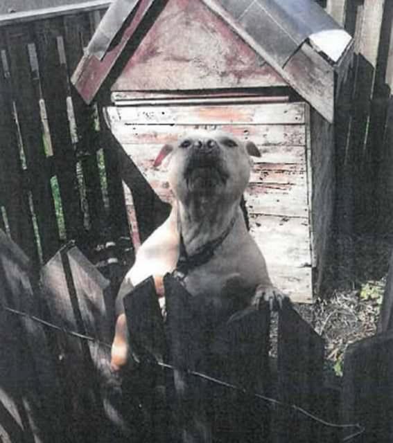 Хозяин, питбуль которого насмерть растерзал соседа, сядет в тюрьму на 10 лет