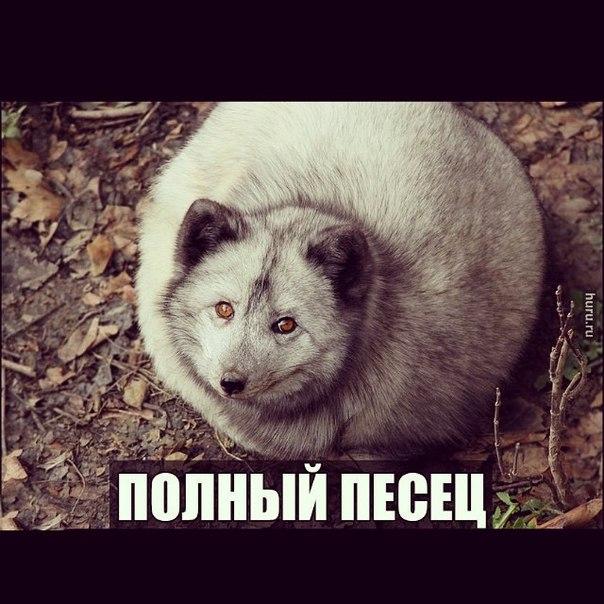 Путин об аннексии Крыма: Ради своих интересов Россия пойдет до конца - Цензор.НЕТ 4087