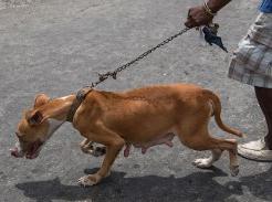 Гайана: 50 лет без Британии