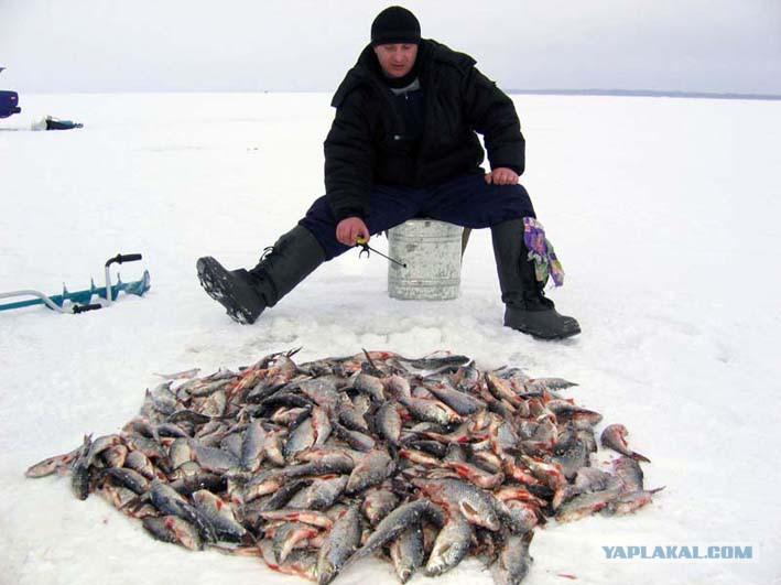 купить рыболовные сети в спб недорого на лесной