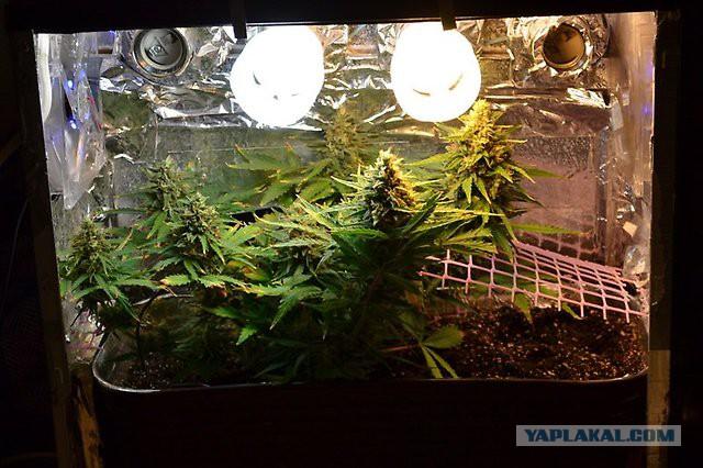 Какая лампа нужна для выращивания 32