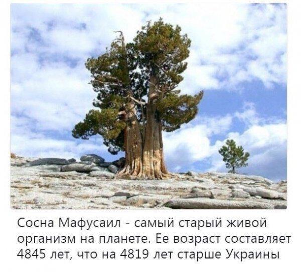 http://s00.yaplakal.com/pics/pics_original/1/4/3/11550341.jpg