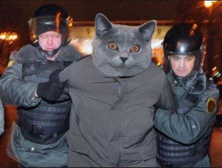 В Перми арестовали кота