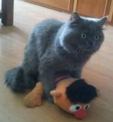 трах с котом