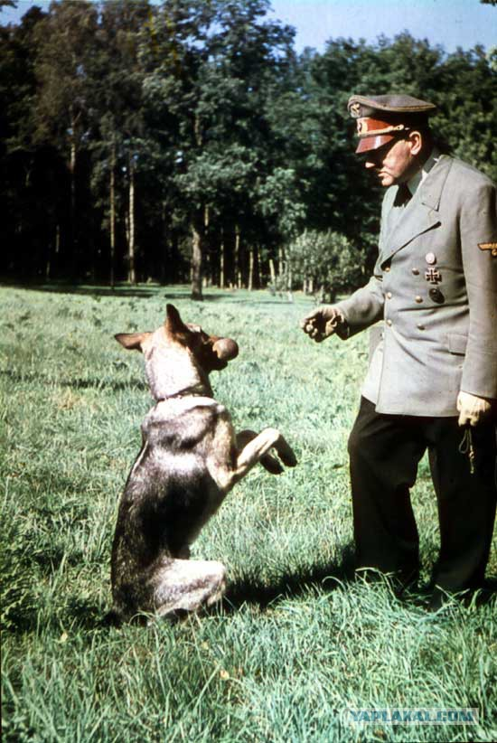Говорящие собаки 5392051