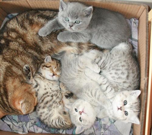кошек, фото кошек, картинки кошки.