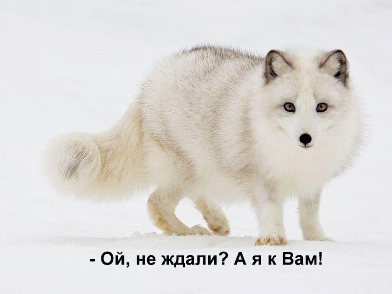 http://www.yaplakal.com/uploads/post-3-13197095212361.jpg