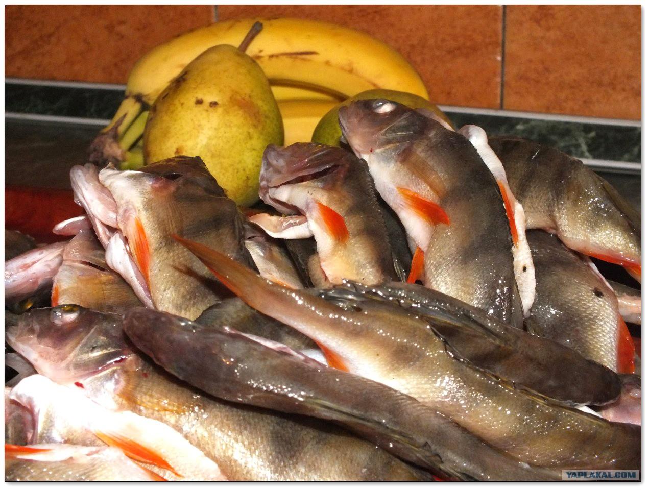 Почему умирают рыбки в аквариуме и 222
