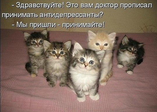 20 самых известных котов в интернете. = Hodor