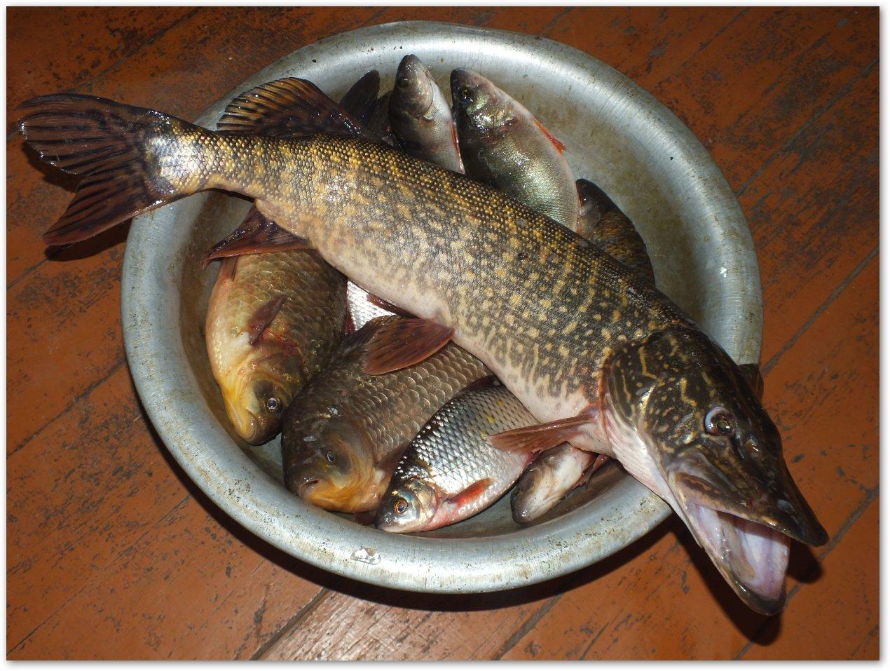 рыба хе из толстолобика рецепт видео