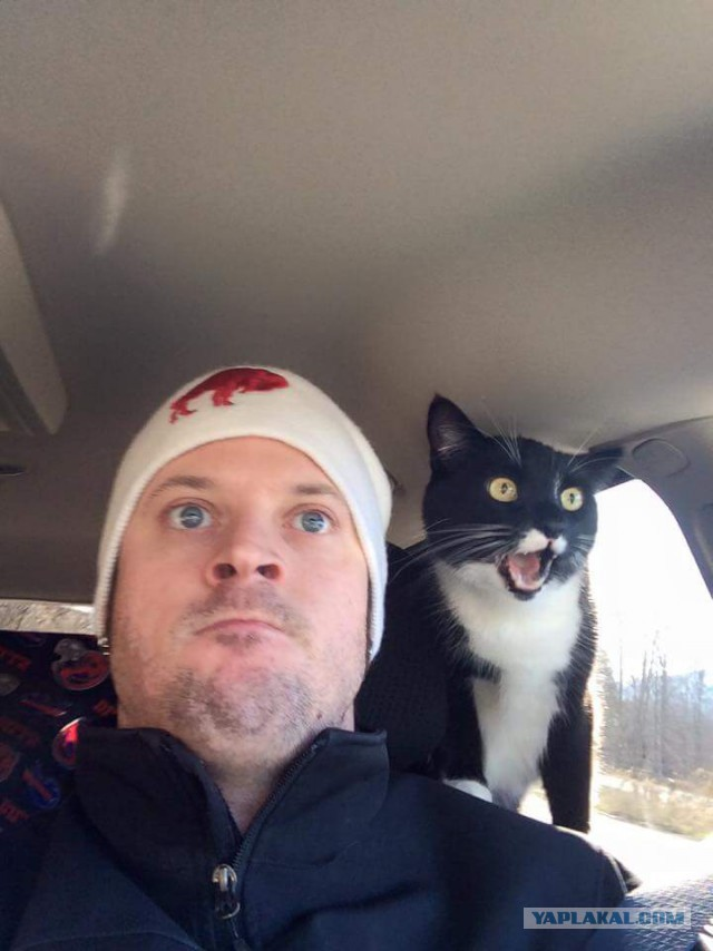 19 бесподобных котов, которые родились, чтобы прославиться.