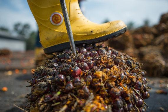 Правительство собирается ввести налог на газировку, пальмовое масло и чипсы