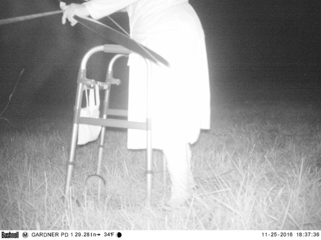Полиция установила камеру ночного видения, чтобы найти пуму, но ситуация вышла из-под контроля