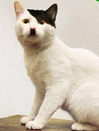 Коты фашисты