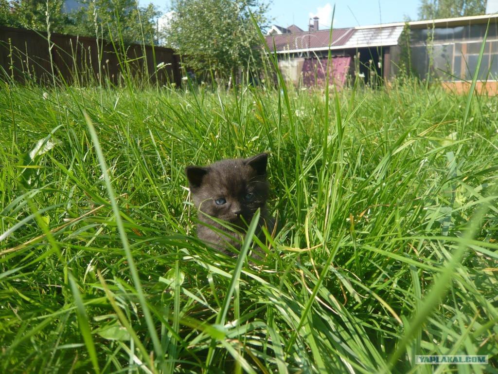 а у нас сегодня кошка: