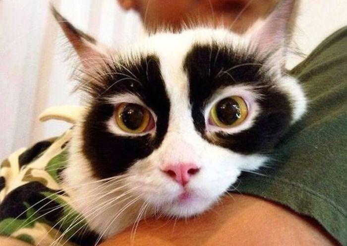 необычные коты картинки