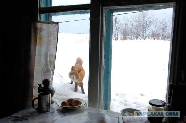 """Подборка """"тёплых, уютных, домашних"""" фотографий. Часть 2"""