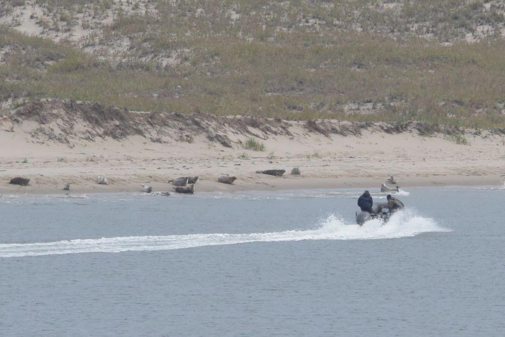 Фотки тюленя