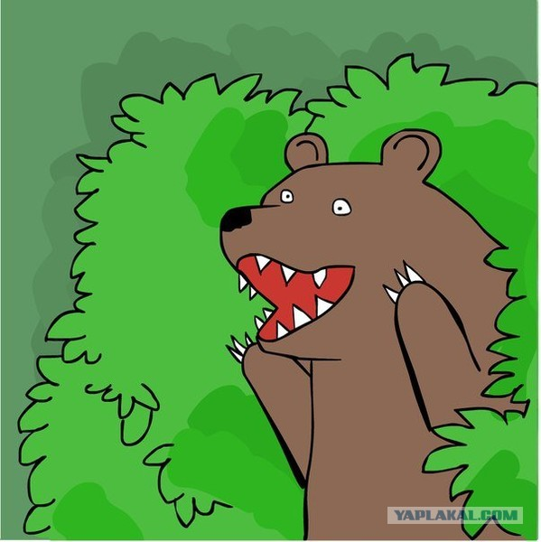 медведь из кустов фото шлюха