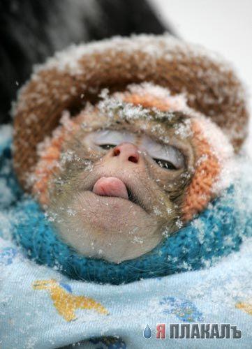 клип снежинки ртом ловила