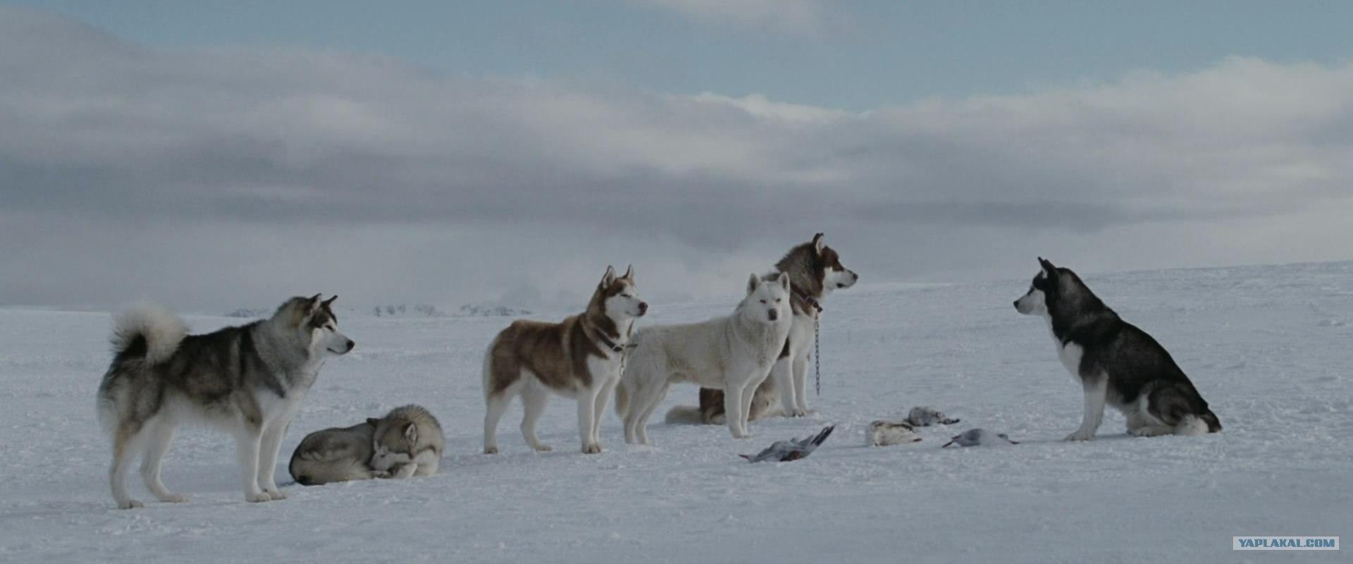смотреть бесплатно фильм белый плен онлайн бесплатно: