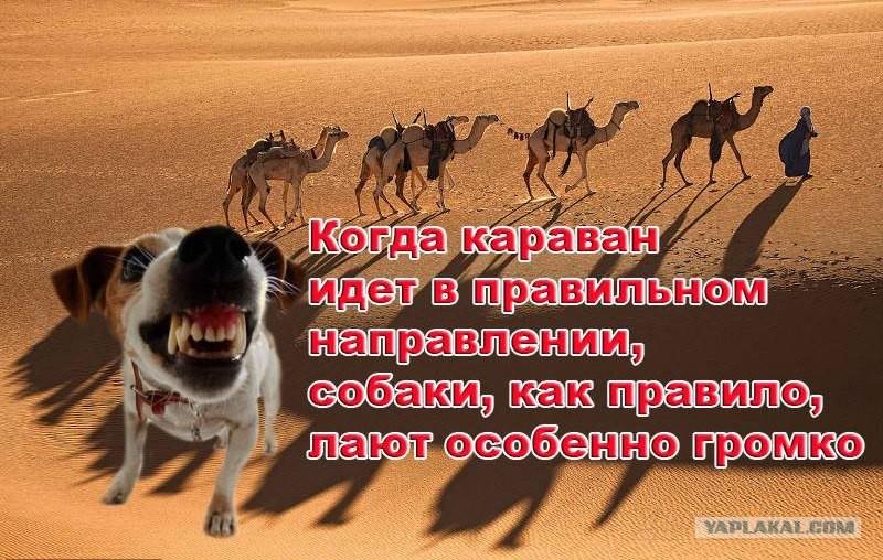 Пословица собака лает караван идти