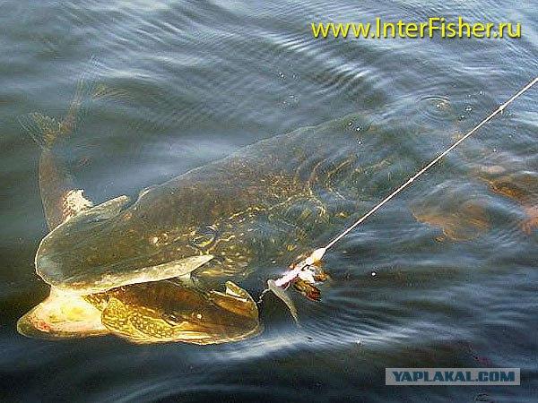 можно ли поуже шагать получай рыбалку