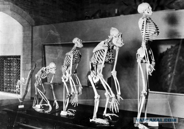 10 фактов о странностях эволюции человечества