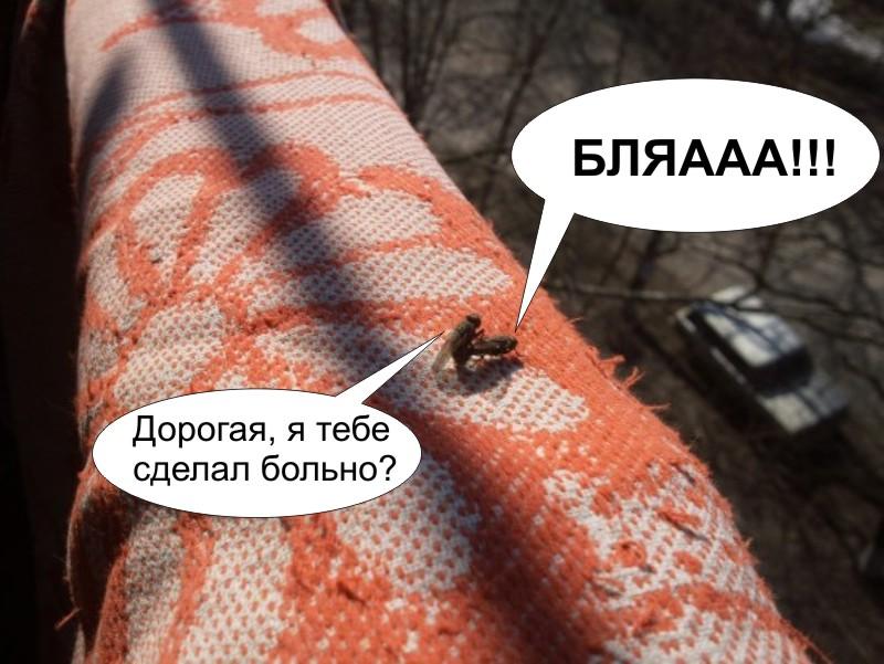 порно про мух