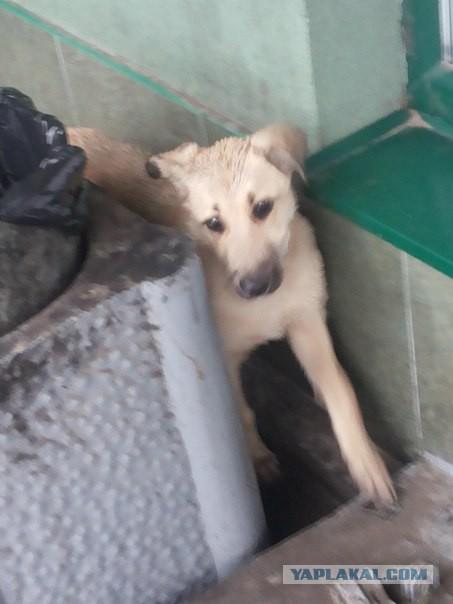 Доброты пост) ищет дом собака! СПБ и ЛО
