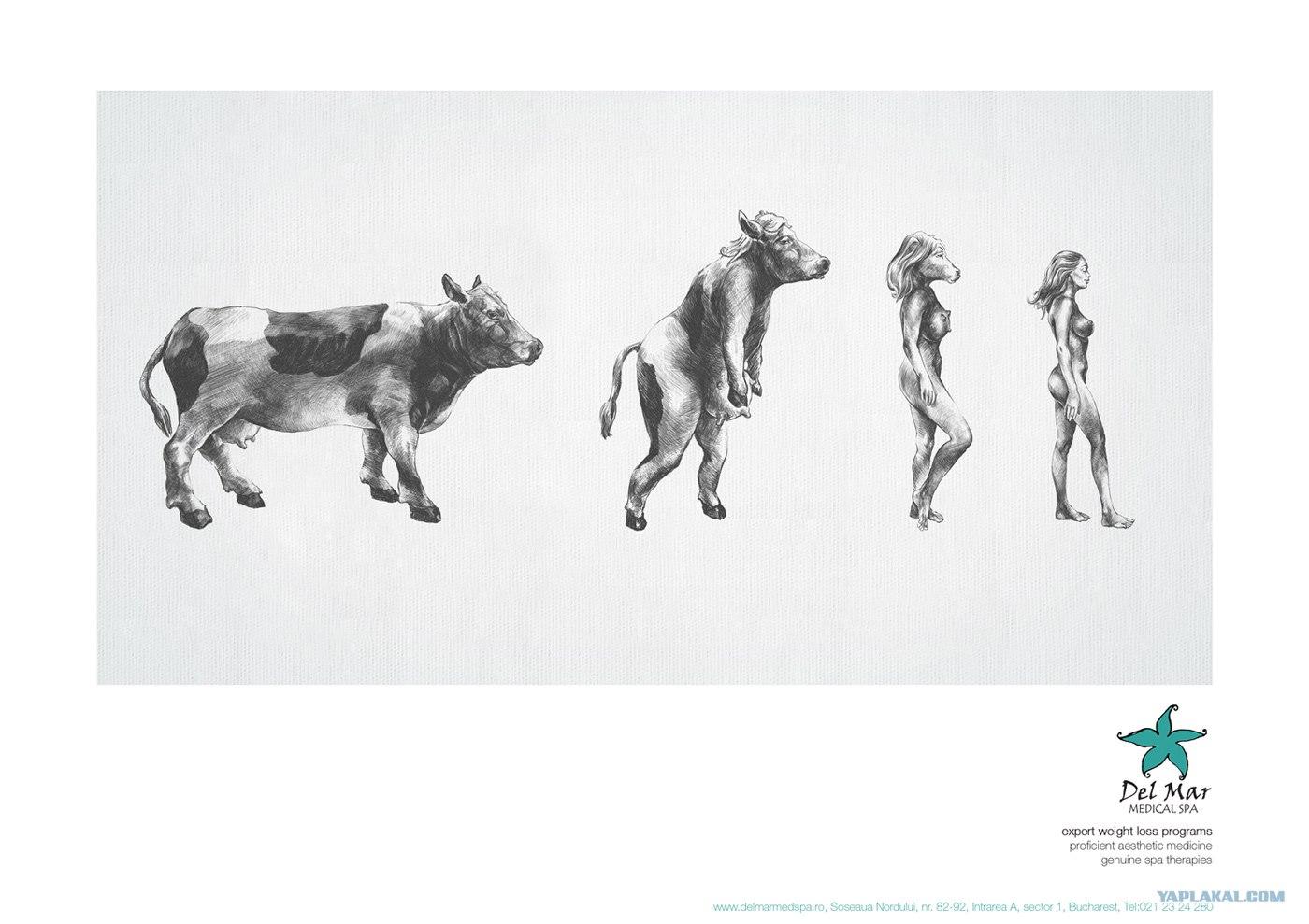 Эволюция человека яплакалъ