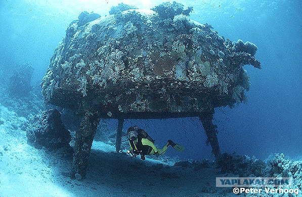 Подводный мир контуа по прелести не уступает тому, что мы видели вблизи мюжере
