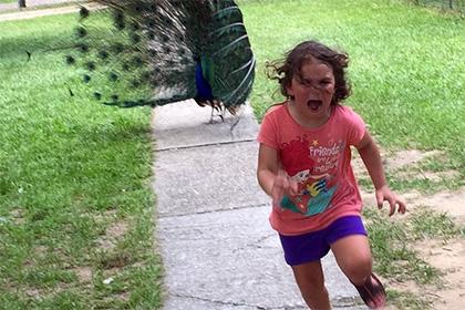 Доведенная павлином до истерики девочка стала героиней фотошоп-битвы