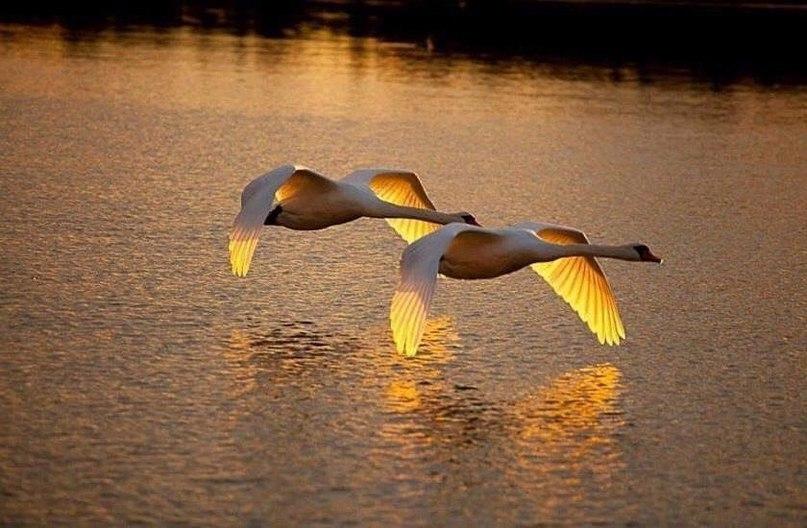 Просто красивые фото - Страница 35 11462612