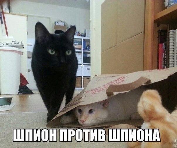 http://s00.yaplakal.com/pics/pics_original/2/1/8/9412812.jpg