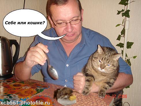 правильное питание кота шотландского вислоухого 3 месяца