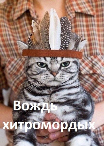 http://s00.yaplakal.com/pics/pics_original/2/2/4/9226422.jpg