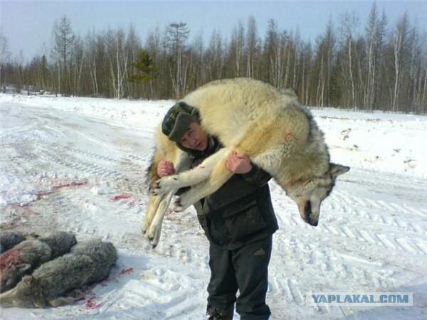 Спасаясь от стаи волков, охотники 12 часов просидели на крыше кормушки