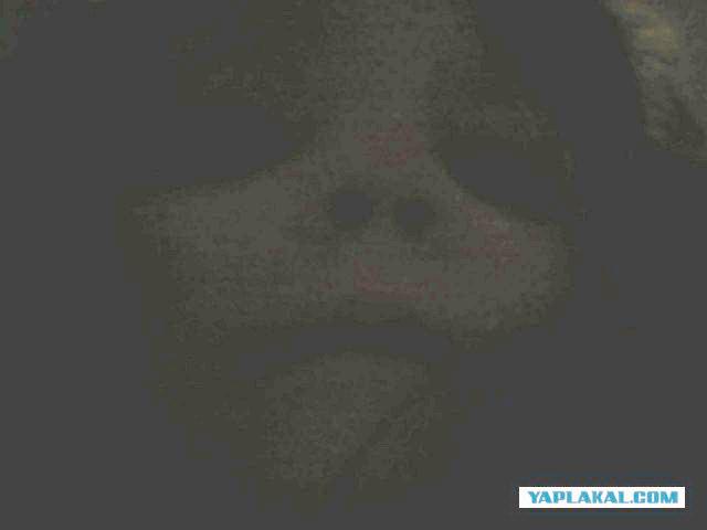 Странная фотография с планшета, найденного на даче