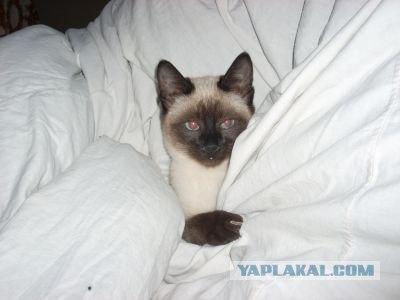 http://s00.yaplakal.com/pics/pics_original/2/3/9/429932.jpg