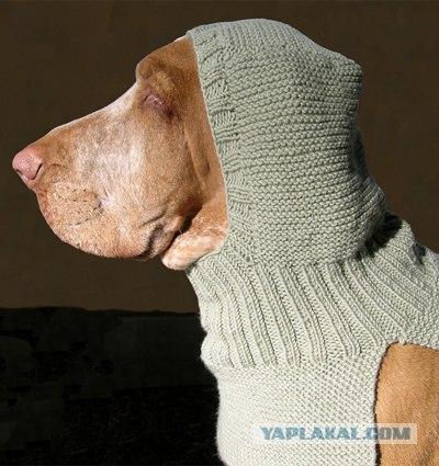 как сделать подкладку в вязанной кофте. схема вязания одежды для собак.