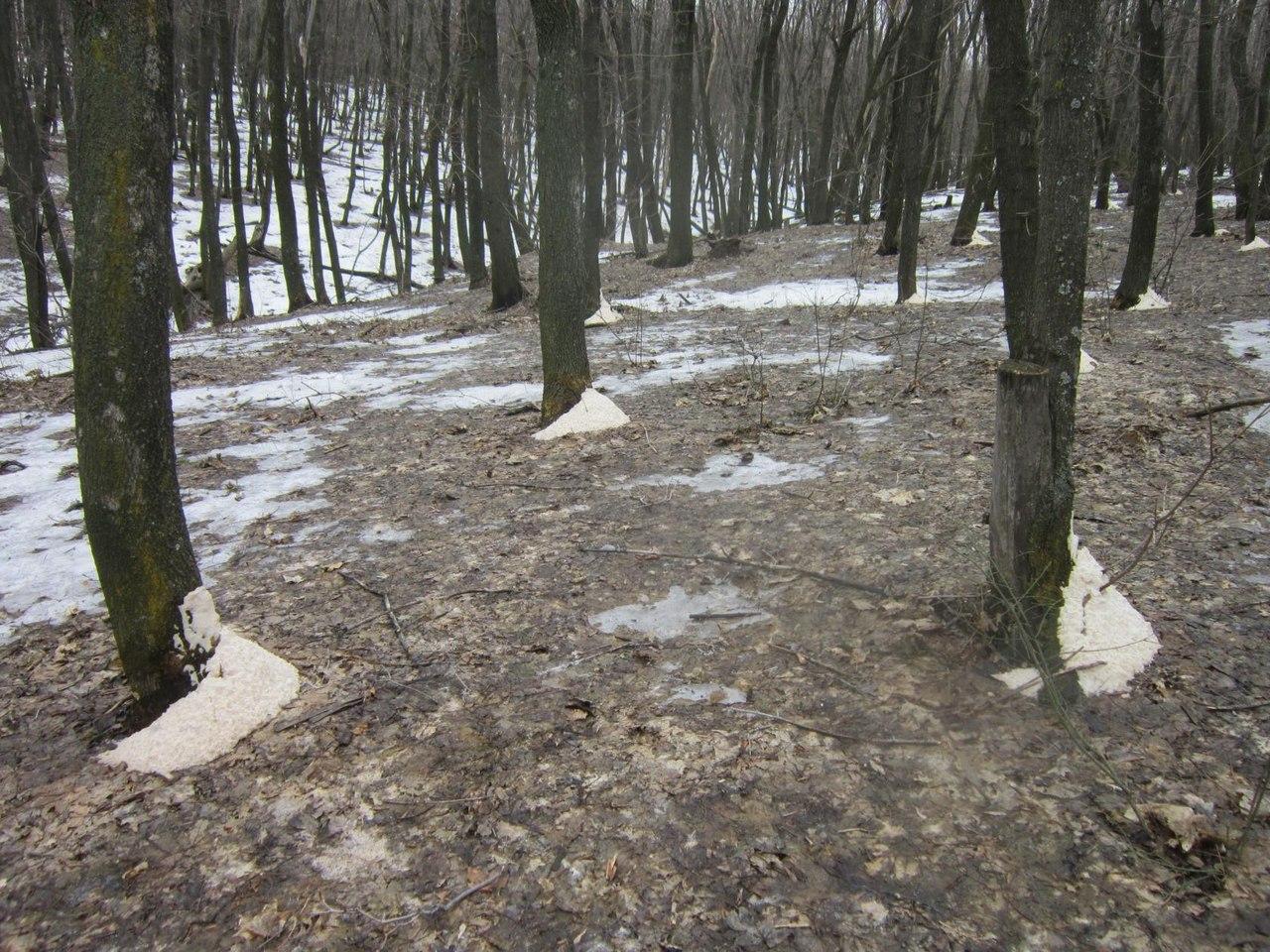 Раздели в лесу онлайн 4 фотография