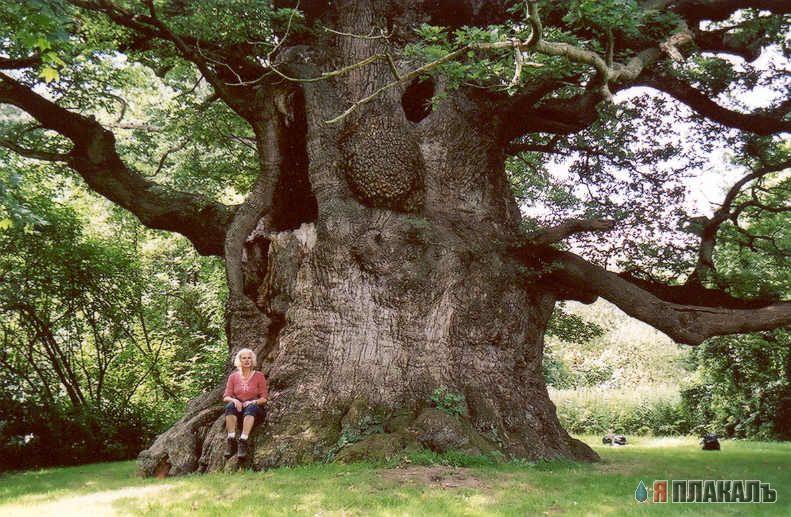 Уникальное дерево было обнаружено группой 12 Фото. Декабрь