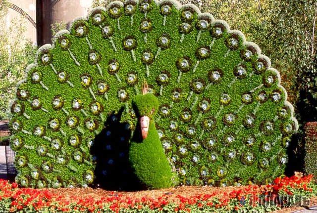 for Arbustos de jardin nombres