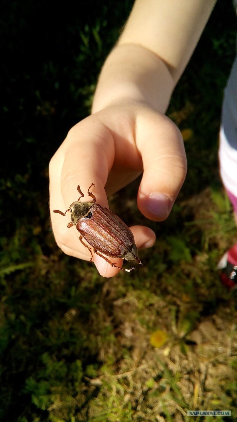 ловля жуков купить