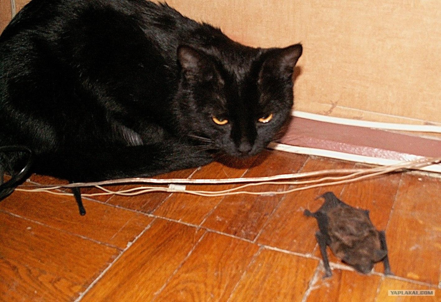 если кошка не ловит мышей что делать