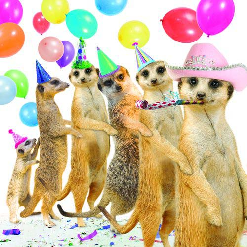 Животные поздравление с днем рождения