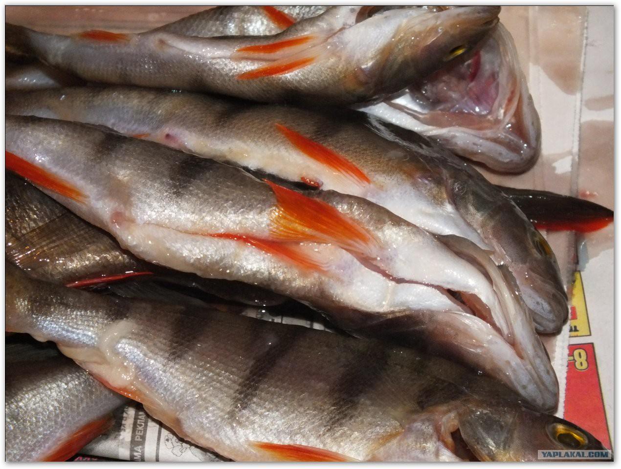 Соление и вяление рыбы в домашних условиях 40